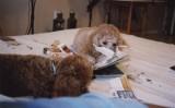 Nuffy and Snuffy  Dec. '07