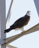 Wheeler Wildlife Refuge - 03/12/2011