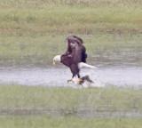 Wheeler Wildlife Refuge - 04/04/2011