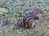 Wheeler National Wildlife Refuge - 09/02/2011