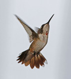 Hummingbirds for 2012 - Part 1 & 2