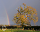 Rainbow at Willand
