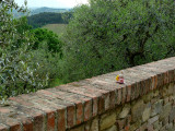 An Easter bunny visits the olive grove