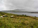 Blissfully heedless of the Celtic Mist