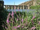 Puente Quintos Sobre el Rio Esla