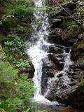 Forest Falls ~ September 11th