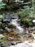 Busy Brook ~ September 26th