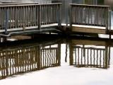 Cedar Pond ~ March 25th