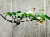 The Crab Apple Tree ~ April 28th