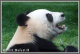 Macau Panda Pavilion 澳門大熊貓館