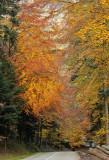 la splendeur de l'automne