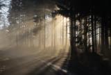 les rayons de soleil percent le brouillard