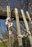 le printemps est arrivé en Alsace