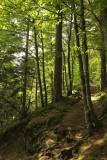 summer forest, Labaroche
