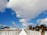mittelbergheim en hiver