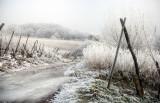 Alsatian vineyard in winter