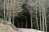 the dark winter forest.