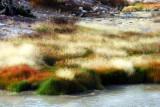 Hot springs grass.