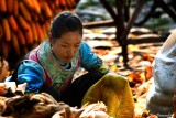 Ethnic Cultural Park.Harvest of the Corn II