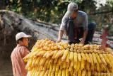Steel Serial.Ethnic Cultural Park.Harvest of the Corn V