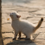 Ethnic Cultural Park.The Kitten who searched to climb the wall