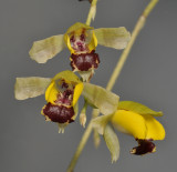Orchids from A to Z