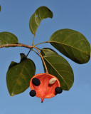 Other plants of Kinabalu National Park
