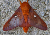MOTHS OF CODORUS STATE PARK
