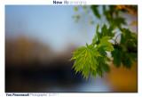 New life ...
