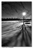 Winter Black And White