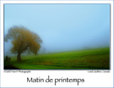 Spring Mist in the Morning ...