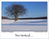 Vertical Trio ...