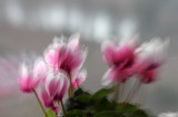 Galleries: Blumen, Pflanzen
