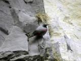 Birdtrip to Spain 2006