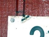 Ögonfläckad fältmätare - Purple Bar (Cosmorhoe ocellata)