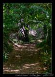 The way of Life ... Chemin de traverse