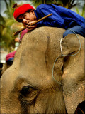 ElefantAsia-Walking with Elephants-Laos