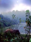 The Elephant Conservation Center-Sayaboury. Laos