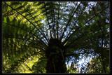 Wirrawilla Rainforest