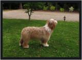 Thumper - 8 Months
