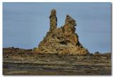 Eagles nest at low tide