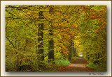 Herfst - Automne - Fall