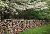 Dogwoods over Stone Fence