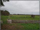 Farmyards