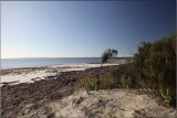 Sunny windswept beach