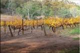 Vines Sklee