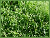 Weeds & alstroemaria