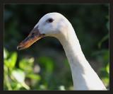 Granddaughter's duck