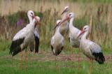 Ptaki z okolic Czarnowa