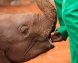 Kenya2011